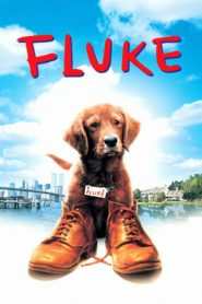 Fluke – Lembranças de Outra Vida – Assistir HD 720p Dublado Online