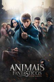 Animais Fantásticos e Onde Habitam ( 2016 ) Dublado Online – Assistir HD 720p